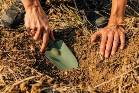 Да превърнем ливадата в градина: Мисията е възможна