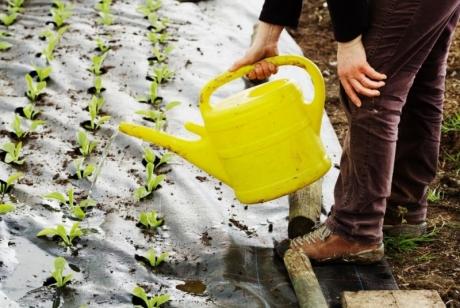Трябва ли да полеем почвата преди засаждане?