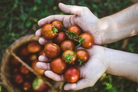Как да имате хубава зеленчукова градина?