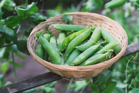 Какви зеленчуци са подходящи за ранно пролетно засаждане?