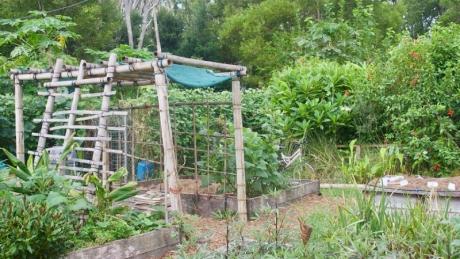 Как да спестите време и пари, ако имате неголяма градина?