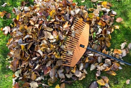 Есенни съвети за подготовка на градината ви за зимния сезон