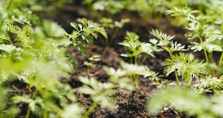 Как да отгледате градина с подправки?